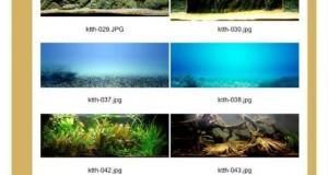 Hình ảnh tranh 3d bể cá