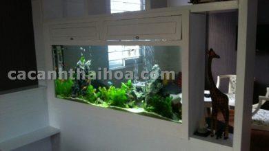 Photo of Bể cá âm tường ngăn phòng