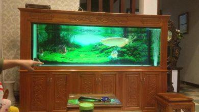 Photo of Bể cá rồng đục lục quý