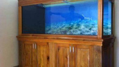 Photo of Bể cá rồng ốp gỗ Dổi