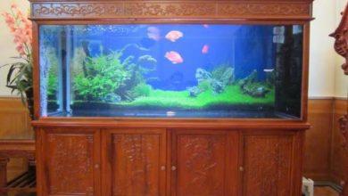 Photo of Bể cá rồng gỗ Hương Đỏ đục tứ quý