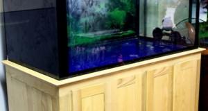 Hình ảnh bể cá rồng gỗ sồi