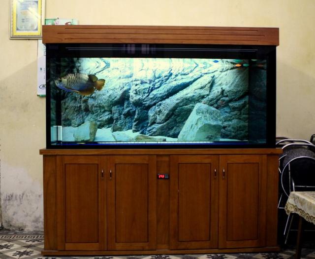 Bể cá rồng chuyên nghiệp gỗ Xoan Đào