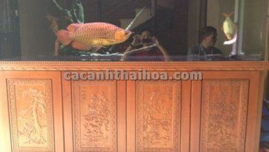 Photo of Bể cá rồng Tùng- Mai- Cúc – Trúc