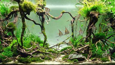 Hình ảnh bể cá thần tiên