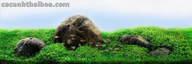 Bể thủy sinh setup bằng đá Cuội