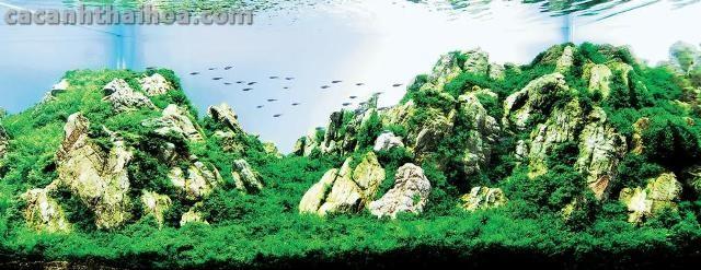 Bể thủy sinh được sắp xếp bố cục bằng đá da voi