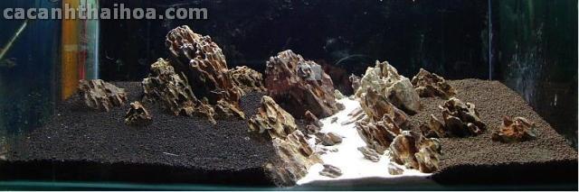 Bể thủy sinh setup bằng đá Tiger