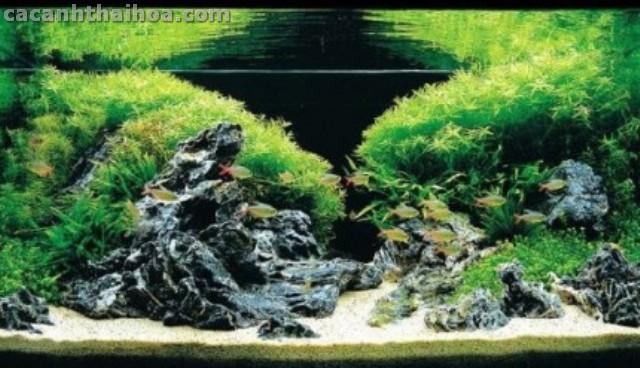 Bể thủy sinh sử dụng đá Xanh