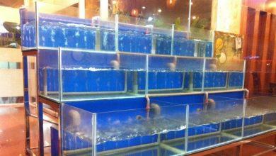 Photo of Dàn bể hải sản và những điều cần biết