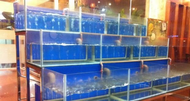 Dàn bể hải sản chân inox kính cường lực