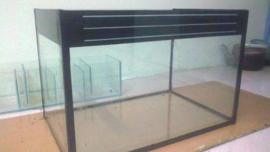 Hình ảnh bể kính keo đen