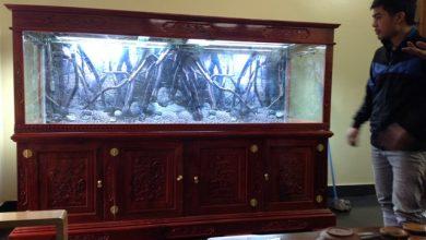 Photo of Bể thủy sinh gỗ Hương đỏ đục tứ quý