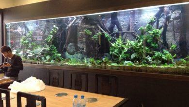 Photo of Bể thủy sinh 5,2m tại nhà hàng Sĩ PHú 121 – Nguyễn Phong Sắc