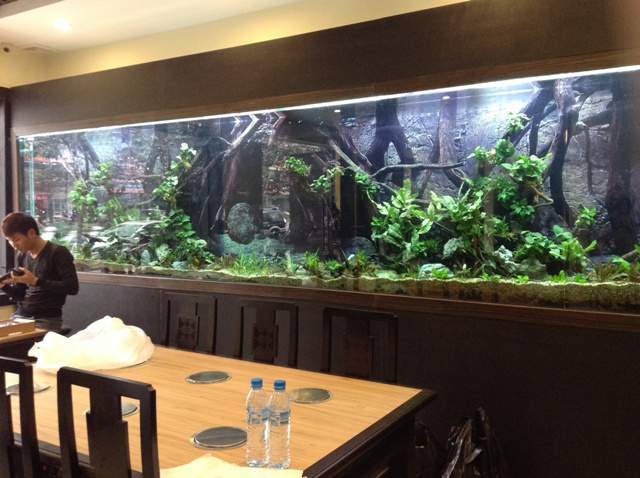Bể cá kích thước lớn cho nhà hàng