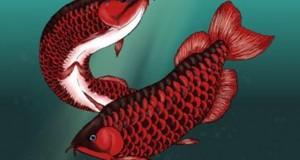 Hình ảnh cá Rồng