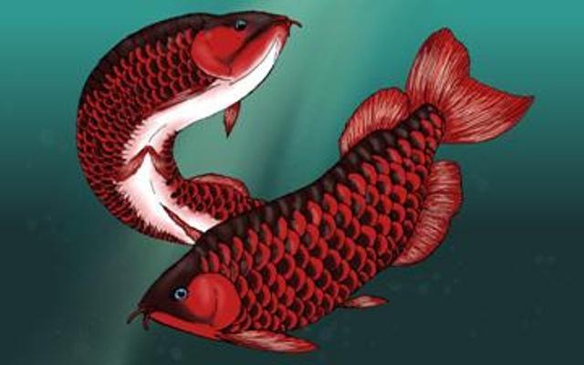 Cá rồng và mối liên hệ phong thủy