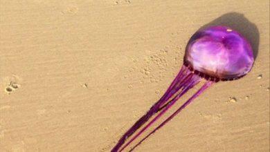 Photo of Con sứa màu tím đầu tiên trên trái đất