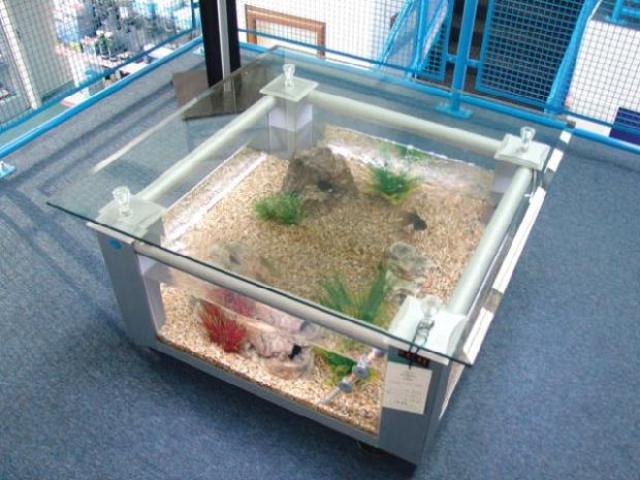 Bể cá bàn được thiết kế độc đáo