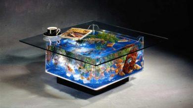 Photo of Bể cá bàn cho người đam mê