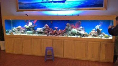 Bể cá biển kích thước lớn cho phòng VIP