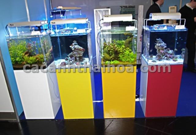 Bể cá mini cubic rất được ưa chuộng
