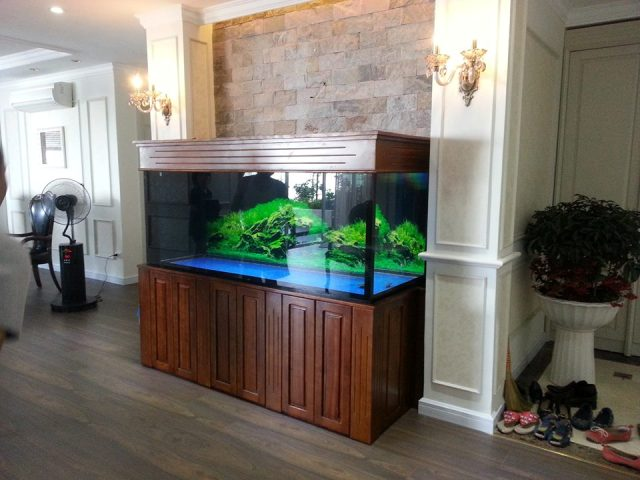 Bể cá rồng gỗ Gụ