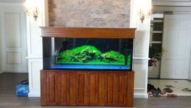Bể cá rồng gỗ gụ tuyệt đẹp