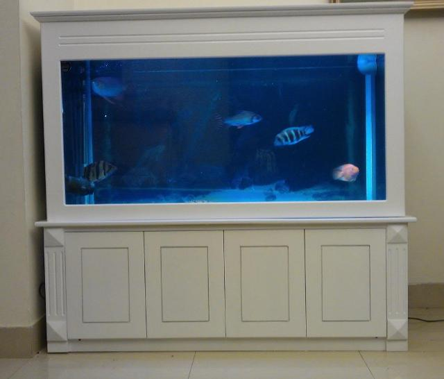 Hình ảnh bể cá rồng sơn trắng