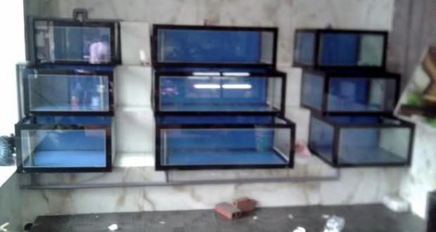 Dàn bể hải sản kính chồng