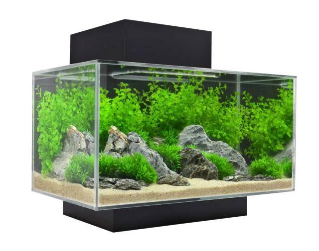 Bể cá mini edge fluval cũng có thể chơi cá nước mặn