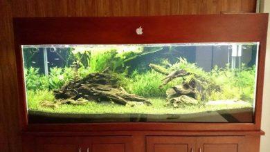 Photo of Bể thủy sinh – Lân Gia Lâm