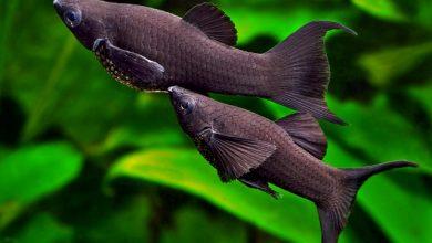 Photo of Những loại cá cảnh dễ nuôi cho người mới chơi