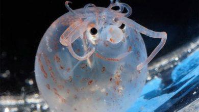 Photo of Những sinh vật biển kỳ lạ
