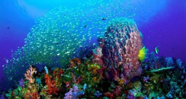 Hình ảnh rạn san hô biển Việt Nam
