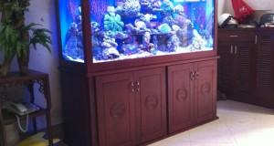 Hình ảnh bể cá biển