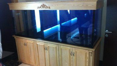 Photo of Bể cá rồng gỗ sồi hiện đại