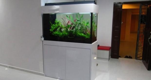 Hình ảnh bể thủy sinh