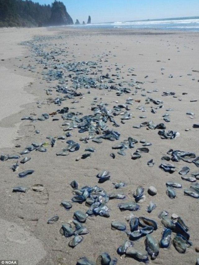 Hình ảnh sinh vật biển kỳ lạ