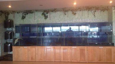 Photo of Dàn bể hải sản nhà hàng thi công tại Thái Bình
