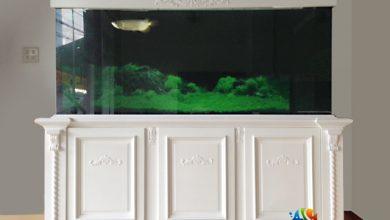 Photo of Bể cá rồng chân trắng phong cách châu Âu
