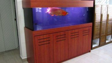 Photo of Bể cá rồng theo phong cách hiện đại