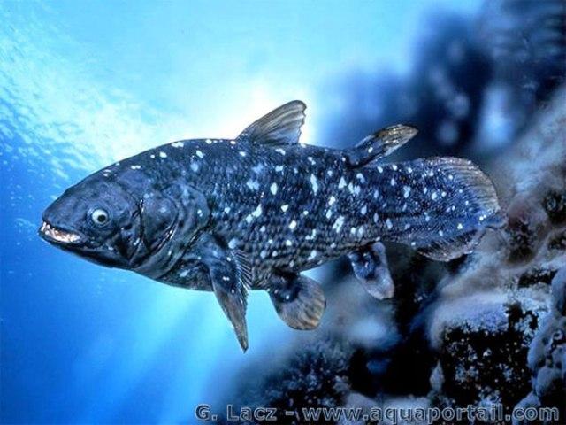 Hình ảnh cá vây tay