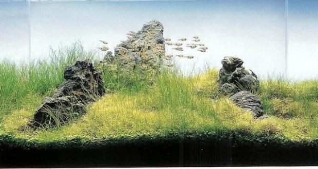 Hình ảnh hệ thống lọc cho bể thủy sinh