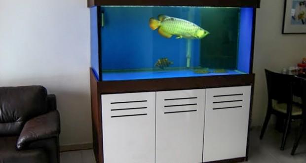 Hình ảnh bể cá rồng gỗ công nghiệp cao cấp