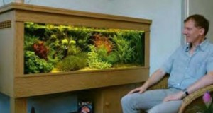 Hình ảnh bể thủy sinh Hà Lân