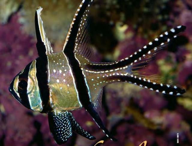 Hình ảnh cá Sơn