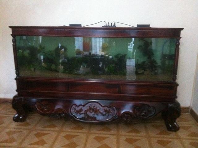 Hình ảnh bể cá chân quỳ gỗ chiu liu