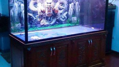 Photo of Mẫu Bể cá rồng gỗ Lim đục tứ quý