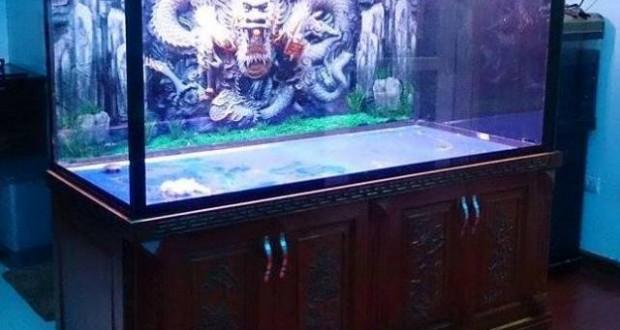 Hình ảnh bể cá rồng bằng gỗ Lim